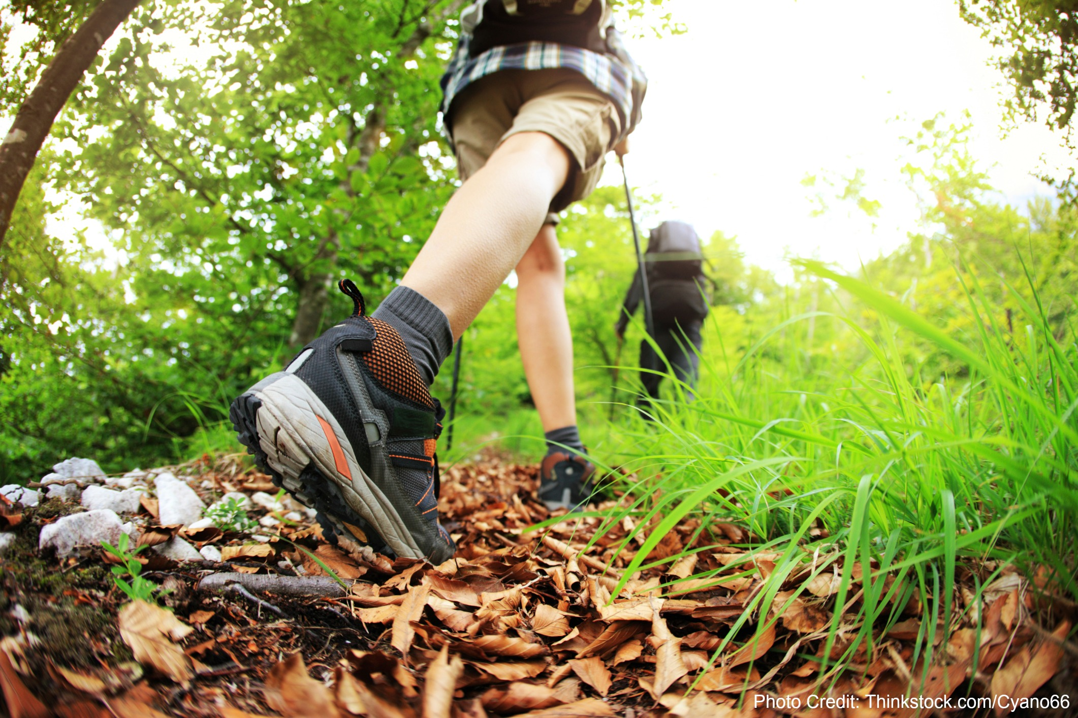 Learn about the best trails for hiking in Dixie National Forest.