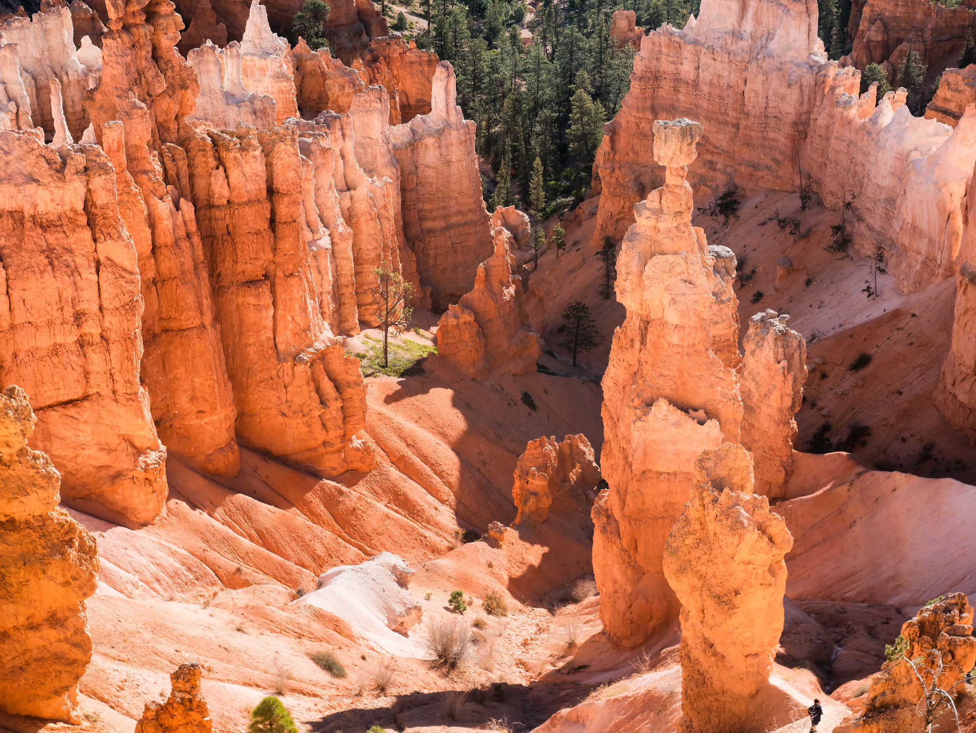 Explore Bryce Canyon National Park via the Navajo Loop and Queens Garden trails.